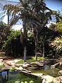 Palmetum Tenerife 07.jpg