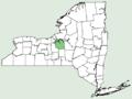 Papaver glaucum NY-dist-map.png