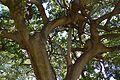 Parc de Benicalap, branques d'arbre.JPG