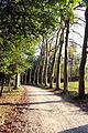 Parco di pratolino, viale alberato 01.JPG