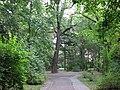 Parcul Central - Bistrita (965020123).jpg