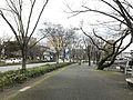 Park Road in Yamaguchi City.jpg