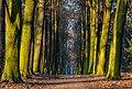 Parque del castillo de Goluchow, Polonia, 2016-12-21, DD 29.jpg