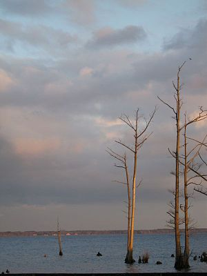 Pasquotank River - East-facing photo of the river near dusk.