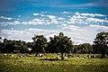 Pasto de Tocantins.jpg