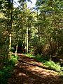 Path-in-biskupin.jpg