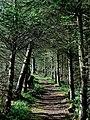 Path - panoramio (38).jpg