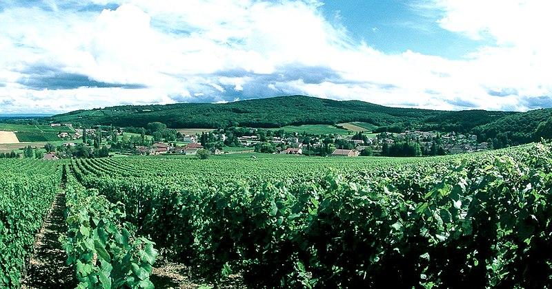Paysage du Haut-Mâconnais (Lugny).jpg