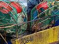 Pesca de centolla en la Bahía Ushuaia 22.JPG