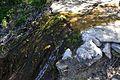 Petit salt d'aigua de la font Vella d'Alpatró.jpg
