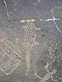 Petroglyph- large lizard at Celebration Park Idaho.jpg