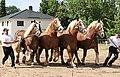 Pferdesportveranstaltung in Seifersdorf (Jahnsdorf)..2H1A8648WI.jpg