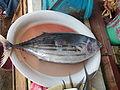 Philippinefish4.jpg