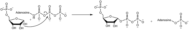 SN2 mechanism of phosphoribosyl pyrophosphate synthetase