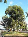 PikiWiki Israel 15305 Tel-Aviv - Yarkon park.jpg