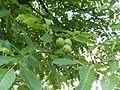 Plant.3017.JPG