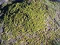 Plant - Iceland - 2007-07-15.jpg