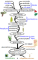 Plant phylogeny.png