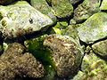 Podmorje selce 0308.jpg