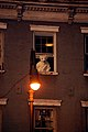 Polar Bear at a Window (3010872666).jpg