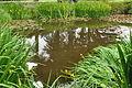 Pond on Caldey Island (6482).jpg