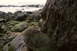 <i>Porphyra</i> genus of seaweed