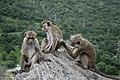 Portrait of Monkey Siblings.jpg