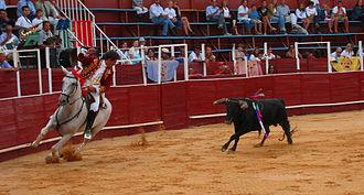 Rejoneador - Cavaleiro and bull
