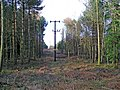 Power Lines through Rowland Plantation - geograph.org.uk - 340034.jpg