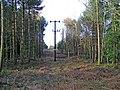 Power Lines through Rowland Plantation - geograph.org.uk - 340034.jpg