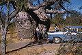 Prison Boab Tree in 1960.jpg