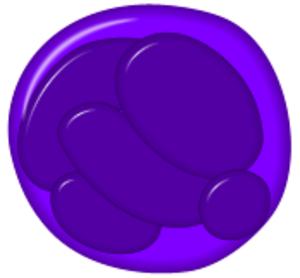 Promegakaryocyte - Promegakaryocyte