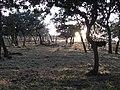 Puesta de Sol Las Avispas - panoramio.jpg