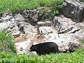QZ spectacled bear jeh.jpg