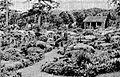 Quarry Alpine Garden Lowther Castle 1937.jpg