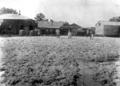 Queensland State Archives 3182 Woolgreen Hariman Park c 1910.png