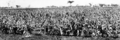 Queensland State Archives 4331 Brown Yolo sorghum at Oakey c 1938.png