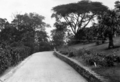 Queensland State Archives 91 The Drive Government House Fernberg Road Paddington Brisbane c 1930.png