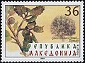 Quercus coccifera. Stamp of Macedonia.jpg