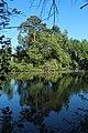 Réserve naturelle régionale des étangs de Bonnelles le 26 mai 2017 - 42.jpg