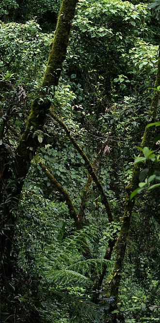 Geography of Costa Rica - Rainforest in Costa Rica