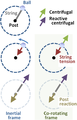 Reactive centrifugal and centrifugal forces.PNG