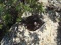 Receptaculo ritual ibérico excavado en la roca, Mas de Toribio (Arenys de Lledó).jpg