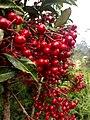 Red ball plant.jpg
