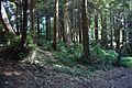 Redwood Memorial Grove 8 2017-06-12.jpg