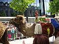 Reims - fêtes johanniques, défilé (10).JPG
