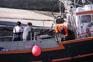 Retour de la pêche à la seiche du fileyeur Jason IV (18).JPG