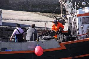 Retour de la pêche à la seiche du fileyeur Jason IV (29).JPG