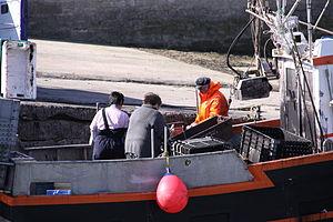 Retour de la pêche à la seiche du fileyeur Jason IV (30).JPG