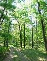 Rezerwat Dziki Ostrów 1.jpg